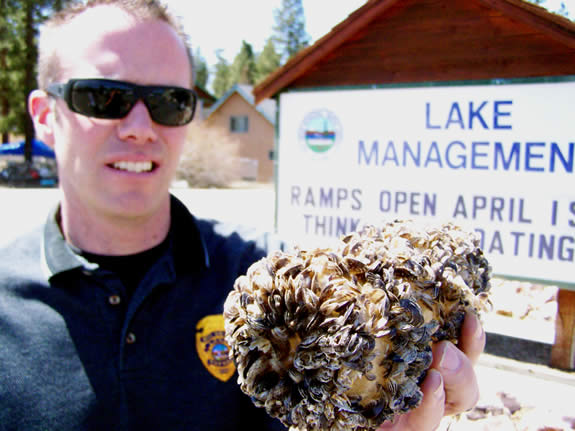 Lake Supervisor Travis Carroll shows a cluster of the quickly multiplying Quagga Mussel, which presents a threat to Big Bear Lake's ecosystem, as well as snowmaking capabilities of the ski resorts. All boats entering Big Bear Lake must be clean, drained and dry to prevent Quagga infestation.