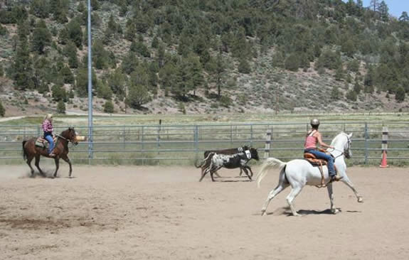 The Los Vaqueros Riding Club, formed in 1946, offers both shows and gymkhanas for public viewing.