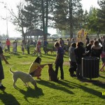 County Offers Dog Licensing Clinic at Meadow Park on the 24th
