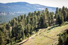 New Hiking Trail at Big Bear Mountain Resort