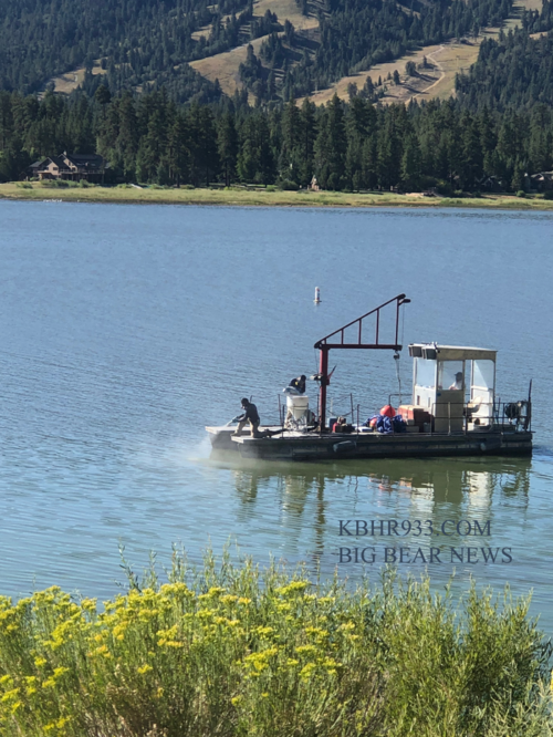 Big Bear Lake Algae Update