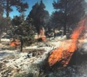 Prescribed Burning Picks Back Up This Week Across National Forest