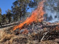 Prescribed Burning This Week in the San Bernardino National Forest