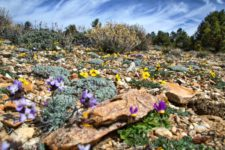 Baldwin Lake Pebble Plain Wildflower Walks Begin Friday