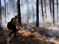 Prescribed Burning Planned for Big Bear Lake