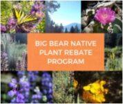 Native Plant Rebate Program