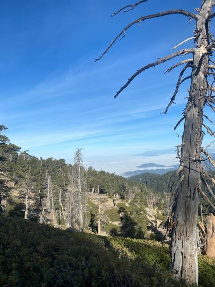 Forest Modifies and Reopens Two Fire Area Closures