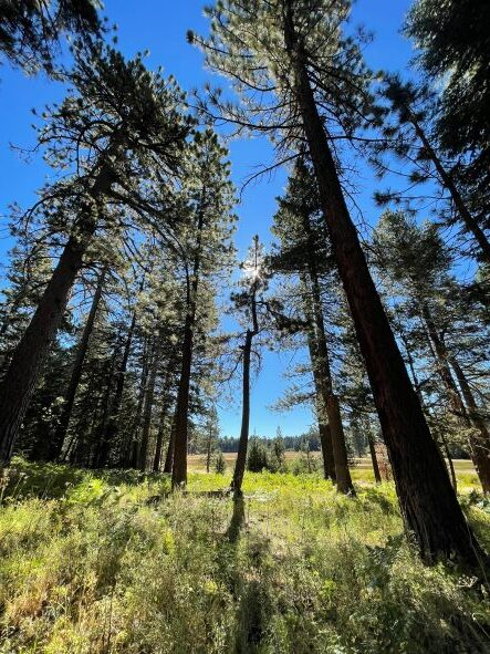 San Bernardino Forest Closure Extended Until 9/23