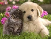 ACC-petfriends