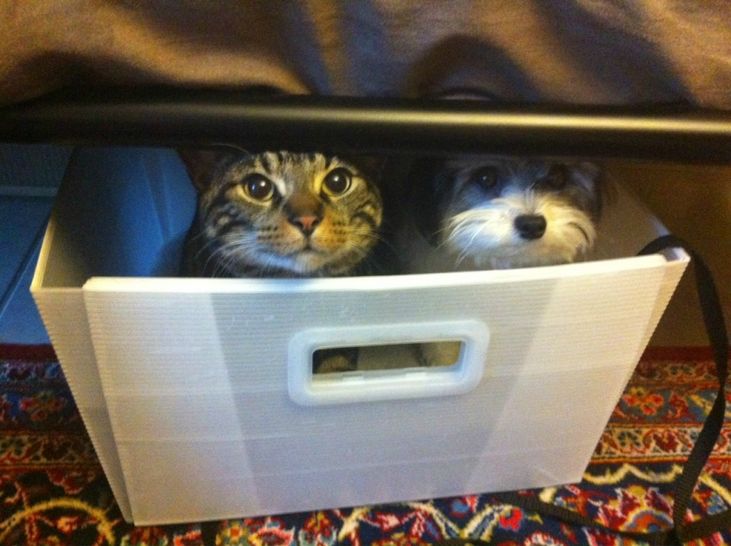 CatDogHiding