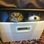 Pets & Pyrotechnics: Plan Ahead