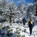 Cougar-Crest-Snow-2011