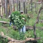 Marijuana Bust Takes Place Below Big Bear Dam