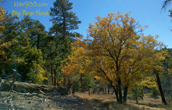 PCT-Tree-Fall-Colors-Big-Be