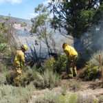 Small Vegetation Fire in Big Bear City Quickly Extinguished by Fire Agencies
