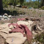 Pebble Plain Clean Up: This Saturday