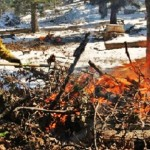 Prescribed Burn on Angelus Oaks Understory Burn Project