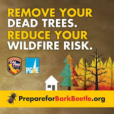 CALFIRE Officials Confirm Over 66 Million Dead Trees in CA