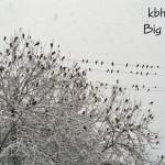 Snowbirds-2011