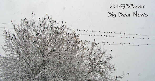 Birds come together during the snowstorm.  They were all quite talkative, and were probably wondering where the nice weather went.