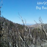 Trees-PCT-October-2011