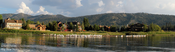 White-Pelicans-BIg-Bear-Lak