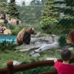 Zoo Site Gets Green Light