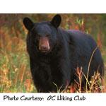 Black Bear photo courtesy OC Hiking Club