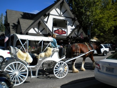 City Council Says Yes to Horse Drawn Carriages