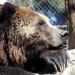 From Wildlife Habitat to the Big Bear Alpine Zoo