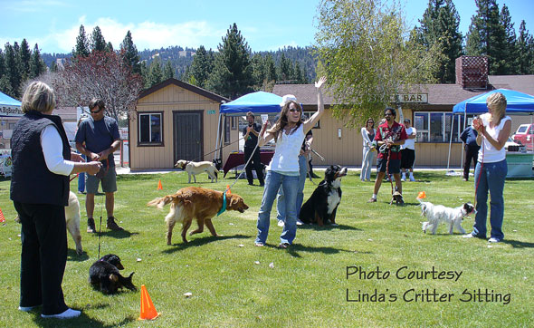 Strut Your Mutt 2011, Photo Courtesy Linda's Critter Sitting